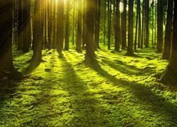 Illimity diventa carbon neutral e adotta la foresta circolare di BAM