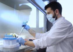 Un passo avanti per la creazione di un modello artificiale di pancreas