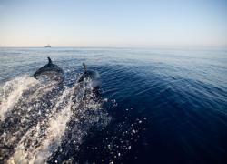"""Mare, Wwf """"2021 anno chiave per il Mediterraneo"""""""