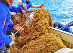 I fondali della Sicilia liberati da due reti fantasma