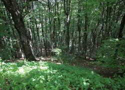 """Assolegno """"Con accordi di foresta gestione attiva del bosco"""""""