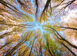 Due foreste vetuste tra patrimoni mondiali dell'umanità
