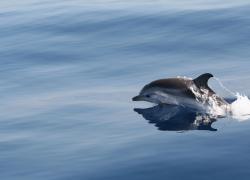 In Sardegna una spedizione per aggiornare ricerche su cetacei e squali