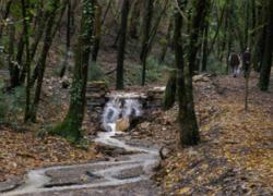 Dalla Regione Toscana altri 25 milioni per le foreste