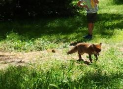 """Il Wwf a Gualtieri """"Roma sia la capitale europea della biodiversità"""""""