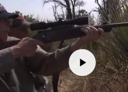 WayneLaPierre, presidente della Nra, spara a un elefante: il video che fa scalpore