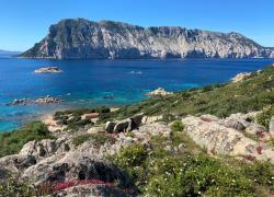 AXA Italiae Worldrise insieme per la tutela dei mari e degli oceani