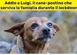 Addio a Luigi, il cane-postino che durante il lockdown distribuiva beni di prima necessità