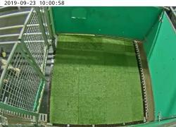 Mucche addestrate per fare pipì: l'idea green contro l'effetto serra. VIDEO
