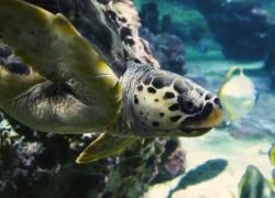 Da Luca Bizzarri ad Arisa: i pesci con le voci vip per gli Oceani
