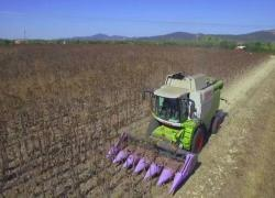 Agricoltura 4.0, Coldiretti e Novamont insieme: nasce Mater Agro