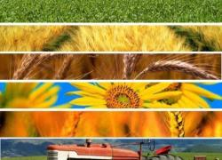 Dalle fonderie all'agroalimentare, le esperienze con Made Green in Italy