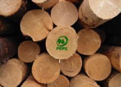 Foreste certificate, Pefc Italia festeggia 20 anni