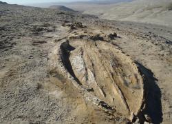 Perù, svelata l'origine di uno dei più grandi giacimenti di fossili di cetacei al mondo
